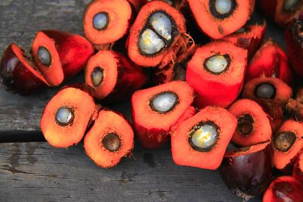 Palm Oil Seeds